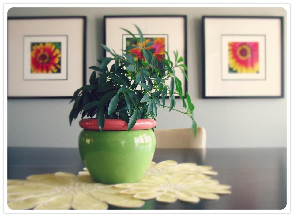 Julies Plant